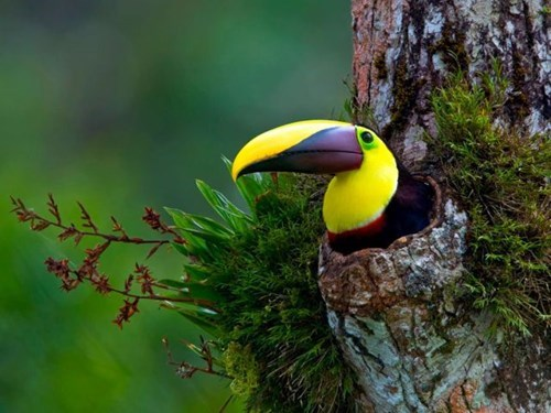 Toucan Take a Picture if Tou Want To