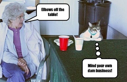 Etiquette lessons are lost on cats.