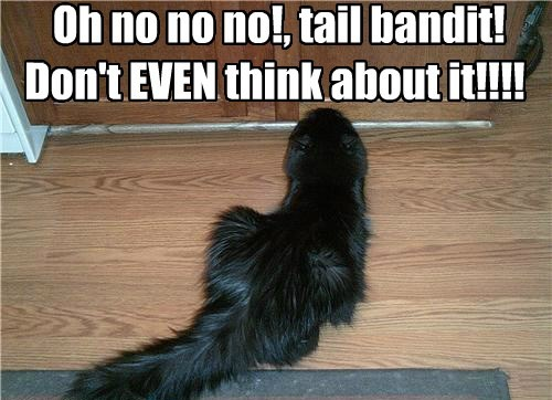 Oh no no no!, tail bandit!  Don't EVEN think about it!!!!