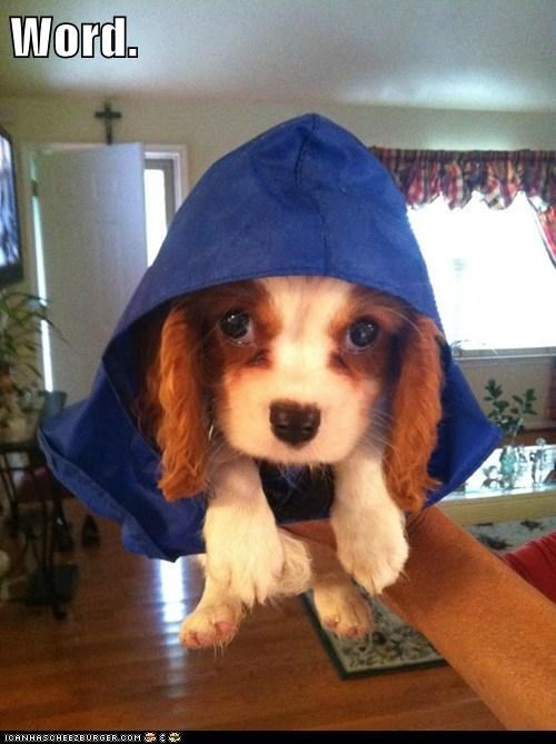 My Dog in the Hood