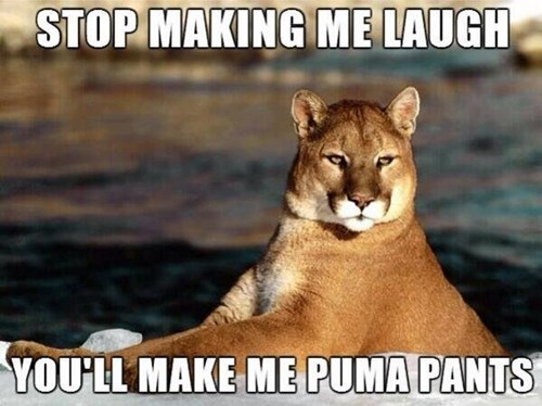 mountain lions,puns,laugh,pumas