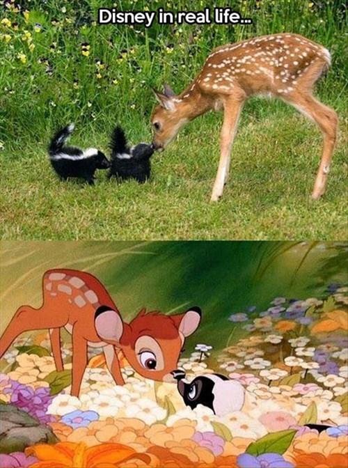 disney,fawns,skunks,cute,deer,Flower,bambi
