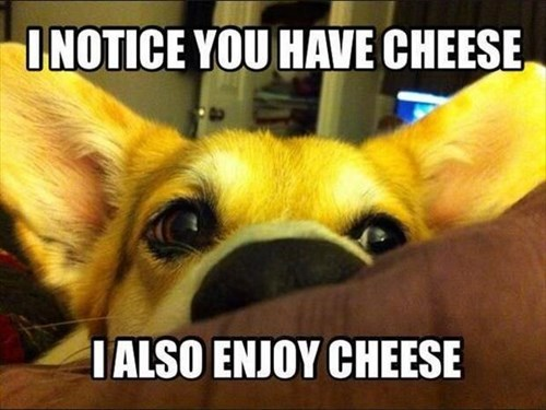 dogs,cheese,puppies,cute,beg