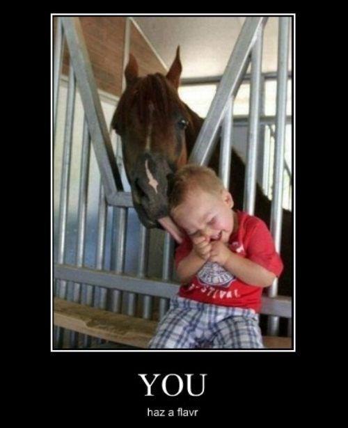 horse,flavor,kids,humans,funny