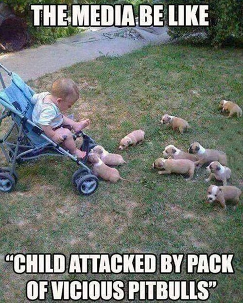 It's a Whole Pack of Them!