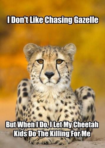 Content Cheetah