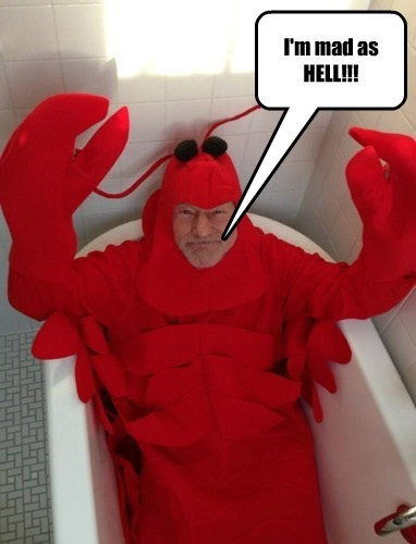Thought you might enjoy a steamed Lobster