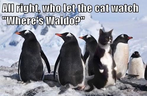 disguise,lookalike,penguins,hide,Cats,funny