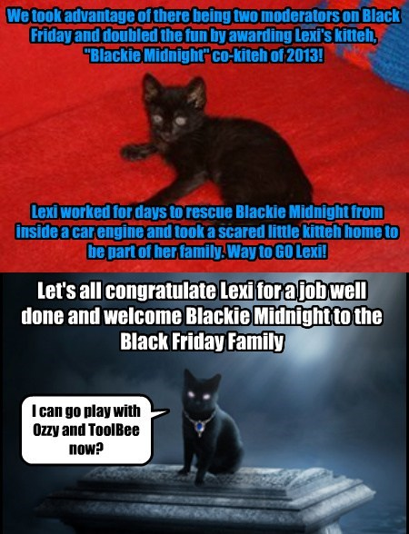 Black Friday's Co-Kitteh of 2013