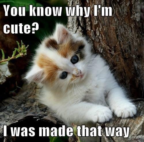 Naturally Cute!