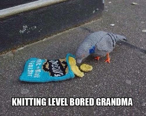 chips,grandma,knitting,bored,pigeons