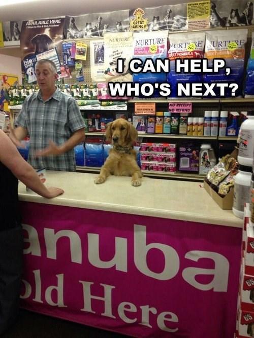 dogs,paw,cute,help