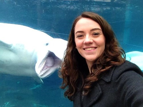 photobomb,dolphins,aquarium