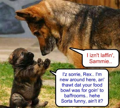 A slight misunderstanding at teh Crawford home as puppy Sammie adjusts to his new home..