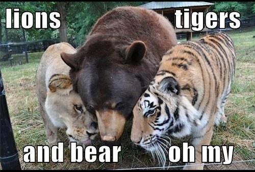 lions                      tigers  and bear         oh my