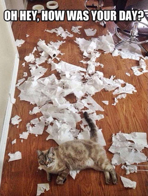 Cats,funny,paper,mess,shred,while you were gone