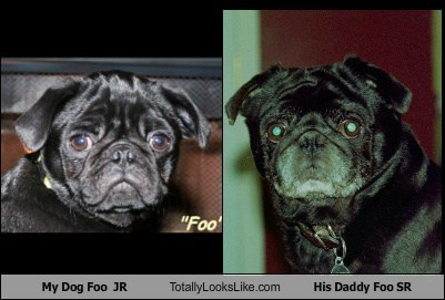 My Dog Foo  JR Totally Looks Like His Daddy Foo SR