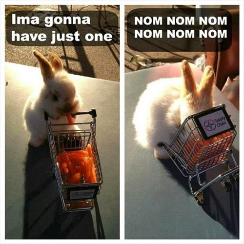bunnies,cute,noms,carrots,rabbits