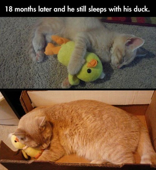 What Fuzzy Kitty Could Resist Such a Fuzzy Duck?