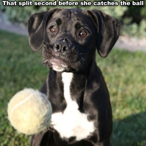 fetch,dogs,catch,cute,concentration,play
