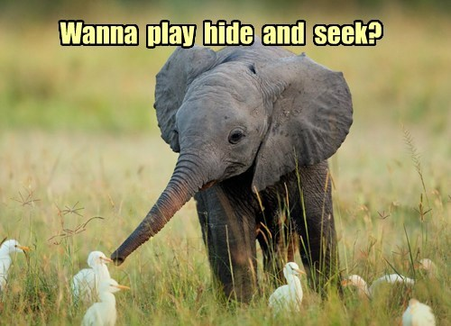 Wanna  play  hide  and  seek?