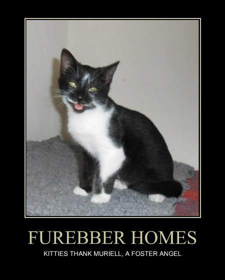 FUREBBER HOMES