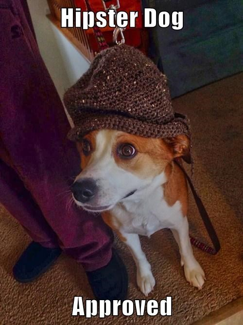 Hipster Dog  Approved