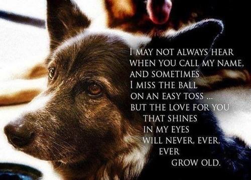 cute,dogs,friends,growing old,love
