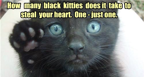 How   many  black  kitties  does it  take  to  steal  your heart.  One - just one.