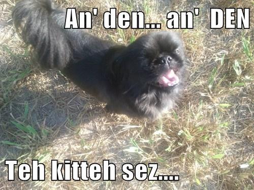 An' den... an'  DEN   Teh kitteh sez....
