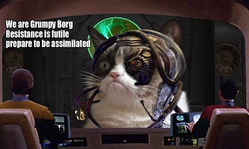 Grumpy Cat,grumpy borg,futile,Star Trek