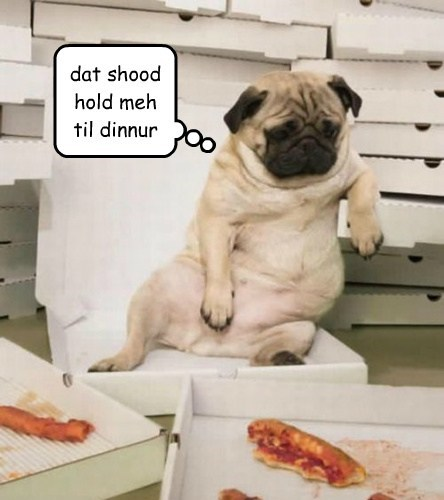 dogs,pizza,cute,dinner,funny