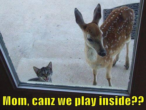 Mom, canz we play inside??