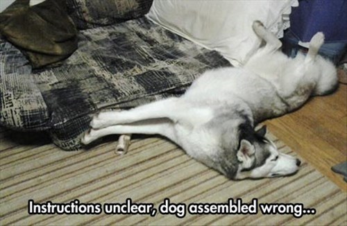 dogs,instructions,funny,unclear