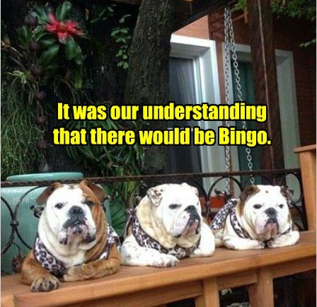 No Bingo, No Bulldogs