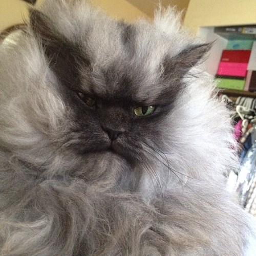 Farewell of the Day: Rest in Peace, Colonel Meow