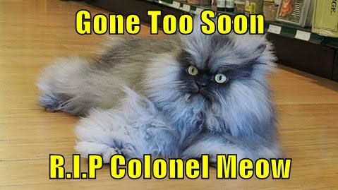 Gone Too Soon  R.I.P Colonel Meow