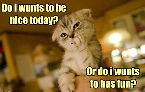 kitten,decisions,Cats,on the fence