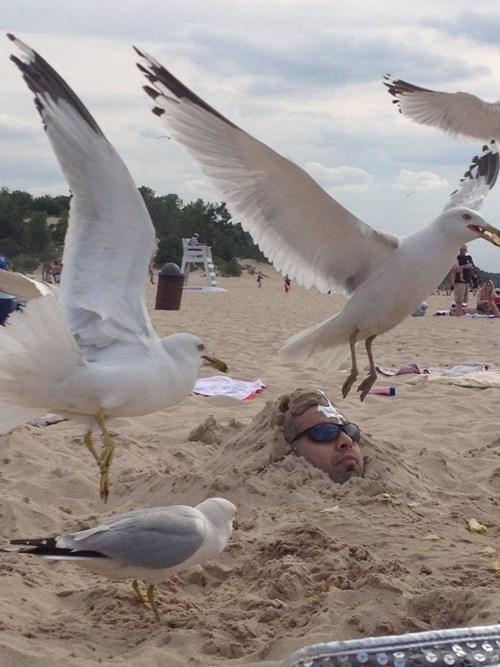ouch,birds,gross,beach