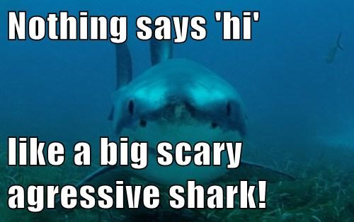 Nothing says 'hi'  like a big scary agressive shark!