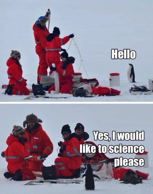 cute,science,penguin,funny,animals,g rated,School of FAIL