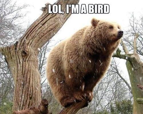 imitate,birds,bears,funny