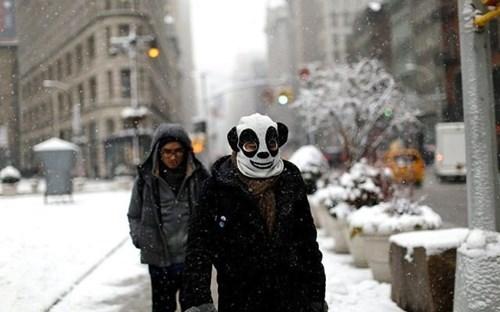 panda,poorly dressed,snow,hat