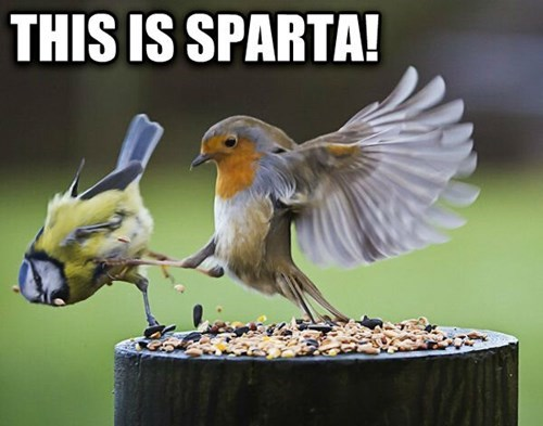 Oh...I Forgot You Could Fly...Well, It's Still SPARTA!