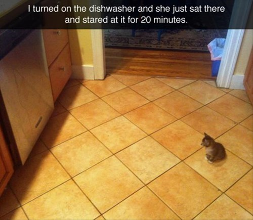 dish washer,kitten,cute,Cats,monster
