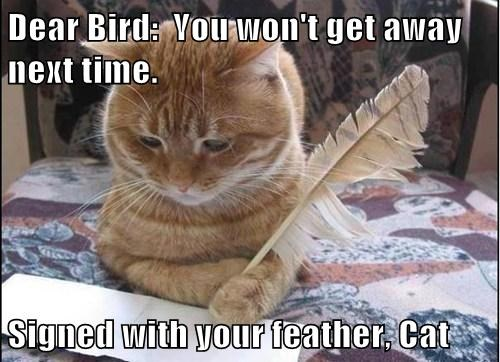 Dear Bird:  You won't get away next time.  Signed with your feather, Cat