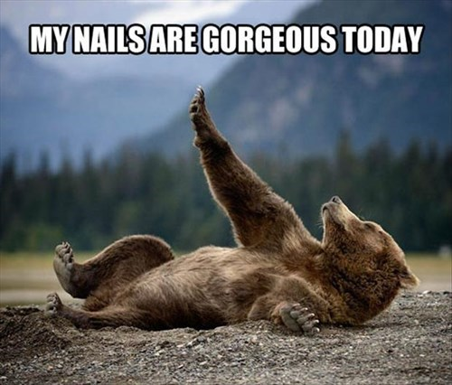 bears,manicure,claws,funny
