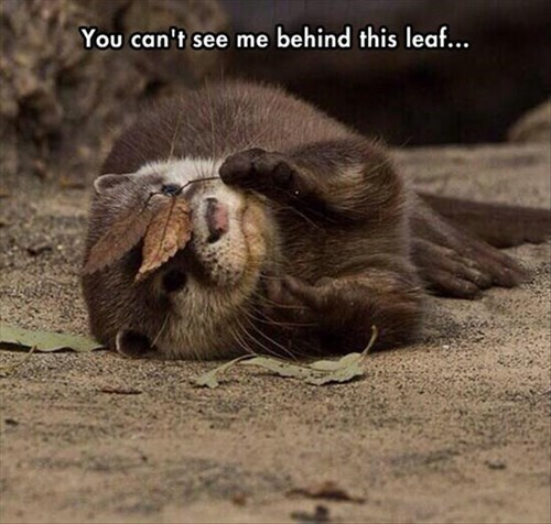 cute,otters,camouflage,leaves