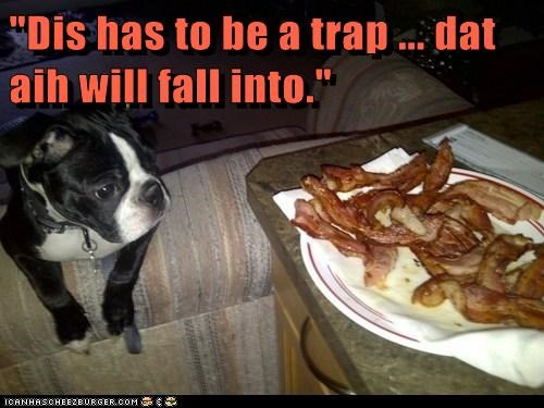 bacon,dogs,funny,trap