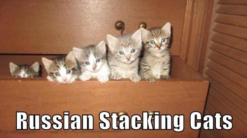 Russian Stacking Cats